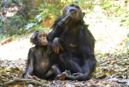 Up, close & personal with chimps