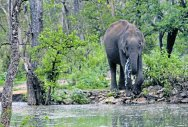 Jumbo gets freedom from temple; to head home