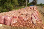 Proposal on onion storage unit lying in cold storage