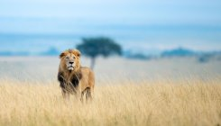 Maasai Mara: A game of life and death