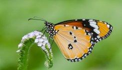 A paradise under construction for butterflies
