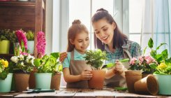 Homes & Interiors: Home gardening, simplified