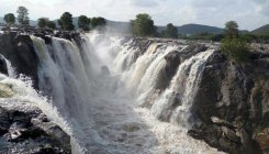 Cauvery waterfalls come to life