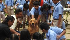 Pets help kids become confident