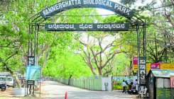 Sandalwood tree stolenfrom outside BBP office