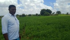 Farmer reaps success in cultivating millets in Kadur