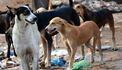 Mizoram court fines dog transporters
