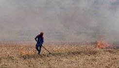 Delhi to breathe easy as stubble burning incidents drop