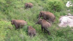 Tusker menace: Centre tells K'taka to use mix methods