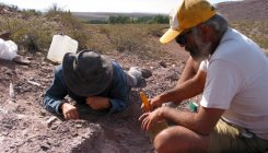 New sauropod species discovered in Argentina