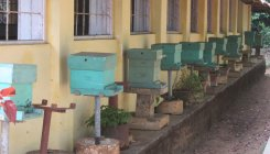 Apiculture is no more sweet for farmers