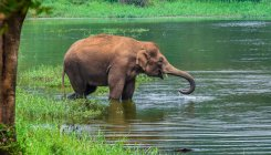 85 jumbos camping in Bannerghatta National Park