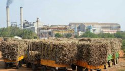 Kisan Cong writes to sugar factory owning leaders