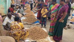 Time to 'go nuts' at Kadalekayi Parishe