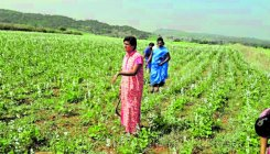 Transgenders script a success story in farming