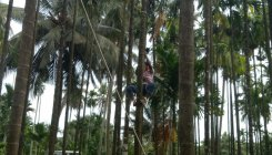 30 youth undergo training in climbing arecanut trees