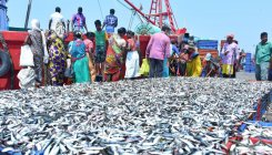 'Goa lifts ban on fish from K'taka'