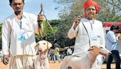 Karnataka's Mudhol Hounds may be deployed in CISF, NSG