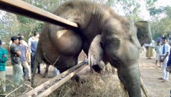 Rail track fence claims life of elephant