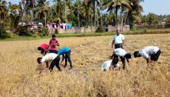 College students learn nuances of paddy cultivation