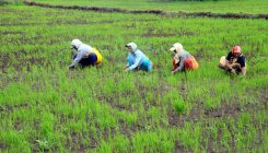 Farm loan waiver: States face long road ahead