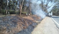 Preventive measures to check forest fire