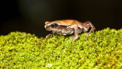 Scientists discover mystery frog in the Western Ghats