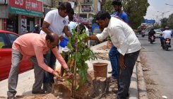 1 lakh saplings for more green cover in all 198 wards