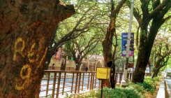 Elevated corridor: Cubbon Park trees facing axe mapped