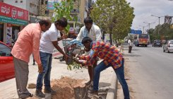 BBMP on mission to locate free saplings on streets