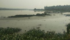 Bellandur Lake to be desilted, but will it help?