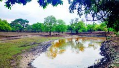 Rains infuse life into forests in tiger reserves