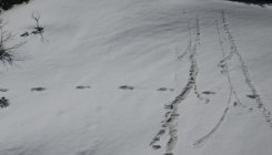 Expedition team found 'Yeti' footprints: Indian Army