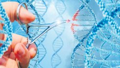 Global team cracks genetic code of high-yield