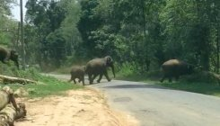 Wild elephants driven to Dubare Reserve Forest