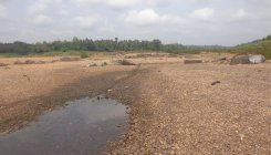 River Nethravathi dries up in Uppinangady