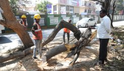 Public talks on tree cutting for metro work