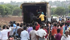 Activists rescue cattle from traffickers