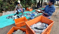 Fish storage: Parties cross swords over formalin use