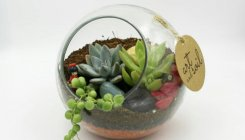 Mini gardens for urban dwellings