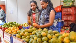 Mangoes safe, shows lab test