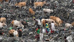 Managing India's waste key to energy, climate benefits