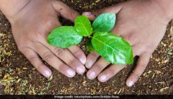UP sets a target to plant 22-crore saplings