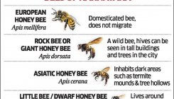State insect? Bees find sudden champion in govt