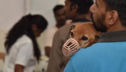 BBMP wants animal board to act on illegal dog breeders