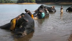 Ker govt to set up Rs 105 cr elephant rehab centre