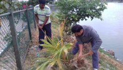 Residents tend to coconut saplings at lake