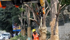 Translocation does not amount to felling trees: MoEF