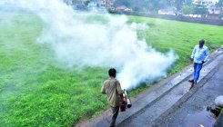 Dengue: 71 breeding sites identified, destroyed