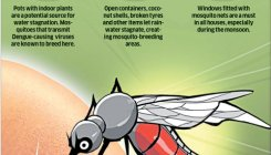 Bengaluru: Dengue, battling a deadly surge